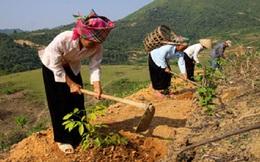 Trồng đại trà cây cao su ở miền núi phía Bắc: Quá phiêu lưu, mạo hiểm