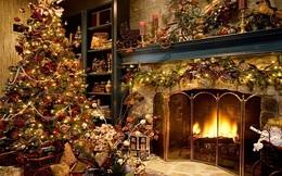 7 điều bạn chưa biết về ngành kinh doanh cây Giáng Sinh ở Mỹ
