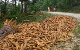 Nông sản rớt giá - Nguy cơ thiếu lương thực cuối năm