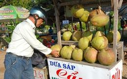 Giá dừa sáp từ 200.000-250.000 đồng/trái