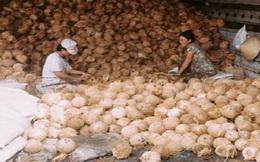 Cận tết, dừa khô nguyên liệu tăng giá mạnh