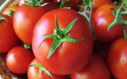 Cà chua được giá
