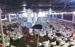 Thực phẩm giảm giá cận tết: Chủ trang trại khóc ròng!