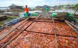 Cá điêu hồng tăng giá mạnh