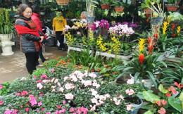TP.HCM: Giá trị hoa, cây kiểng phục vụ tết khoảng 1.321 tỉ đồng