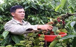"""""""Người trồng càphê Việt Nam 'găm' hàng chờ giá cao"""""""