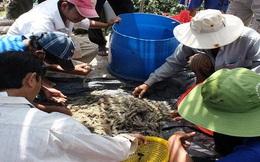 Cà Mau: Sản lượng thủy sản tăng mạnh đợt đầu năm