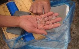 Ngư dân kiếm hàng chục triệu mỗi đêm từ tôm hùm giống