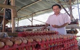 Lợi dụng dịch cúm ép giá trứng gia cầm