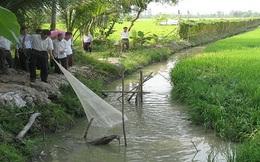 Nông dân Cà Mau phấn khởi được mùa cá đồng