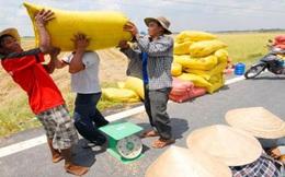 Chi nghìn tỷ tạm trữ lúa gạo, nông dân thêm khổ?