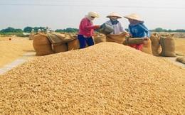 Tiến tới trồng lúa theo đặt hàng của doanh nghiệp