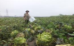 Giá nông sản từ đồng tới chợ: Mắt xích nào cũng hỏng