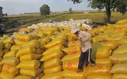 """Tiêu thụ lúa ở Đồng bằng sông Cửu Long: Càng liên kết... càng """"chết"""""""