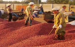 """Ban điều phối ngành cà phê: Có làm nên """"phép màu""""?"""