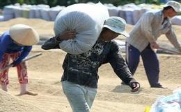 Giá lúa sẽ tăng cao?!