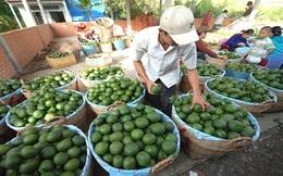 Trái cây mùa nóng dễ tiêu thụ