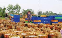 Ngư dân Phú Yên được mùa cá dò