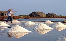 Diêm dân Ninh Thuận lao đao vì giá muối giảm mạnh