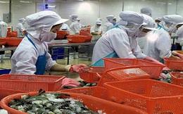 Xuất khẩu tôm sang EU có nhiều điều kiện bứt phá