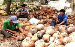 Dừa khô giảm giá
