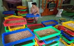 Nguy cơ từ việc nuôi sâu Superworm
