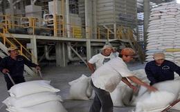 Cần Thơ kiến nghị Chính phủ cho mua thóc tạm trữ thay gạo