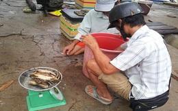 Giám sát thương lái nước ngoài mua thủy sản