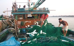 Quảng Trị tích cực giải quyết đầu ra cho nguồn lợi thủy sản