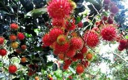 Trái cây vào mùa
