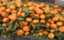 Hoa quả Trung Quốc nhiễm độc: 1 năm báo cáo 1 lần?