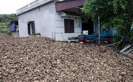 Đầu cơ trăm tấn lá vải bán cho thương lái nước ngoài