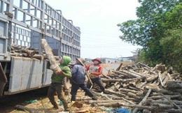 Giảm thuế cao su về 0%: Việt Nam sập bẫy mua rẻ, bán rẻ!