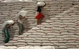 Vụ 2,9 triệu tấn gạo 'mất tích': Thái Lan kiểm tra 1.800 kho gạo