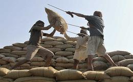 Xuất khẩu gạo: Ấn Độ có thể phải trả lại ngôi vị số 1 cho Thái Lan
