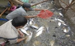 Gần 1 tháng Nghị định 36 về cá tra có hiệu lực