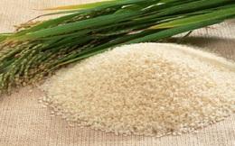 Doanh nghiệp dửng dưng khi gạo Việt sắp bị kiện?