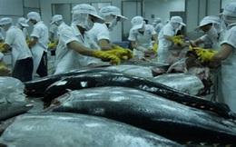 Sản lượng cá ngừ đại dương giảm