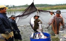 Lưu ý khi xuất khẩu sản phẩm cá nuôi vào UAE