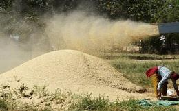 Lệnh trừng phạt Nga ảnh hưởng tới thị trường lúa mỳ thế giới
