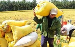 Thận trọng với giá lúa gạo tăng