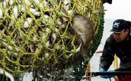 EC cắt giảm hạn ngạch đánh bắt cá của 10 nước thành viên