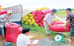Giá lúa gạo tại ĐBSCL giảm