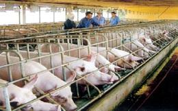 Kiểm soát chặt chất cấm trong chăn nuôi