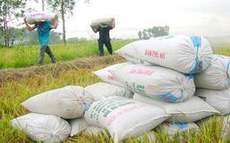 Không thiếu gạo xuất khẩu