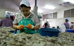 Khủng hoảng tôm và chuỗi cung ứng toàn cầu