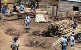 Châu Phi xuất ròng hay nhập ròng gỗ?