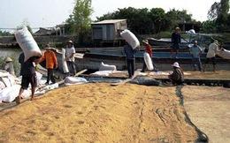 Giá lúa gạo tăng cao nhưng nông dân... hết lúa