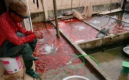 Rực đỏ làng cá chép cúng ông Công ông Táo