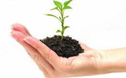 Vẫn nỗi lo trồng gì để bán?